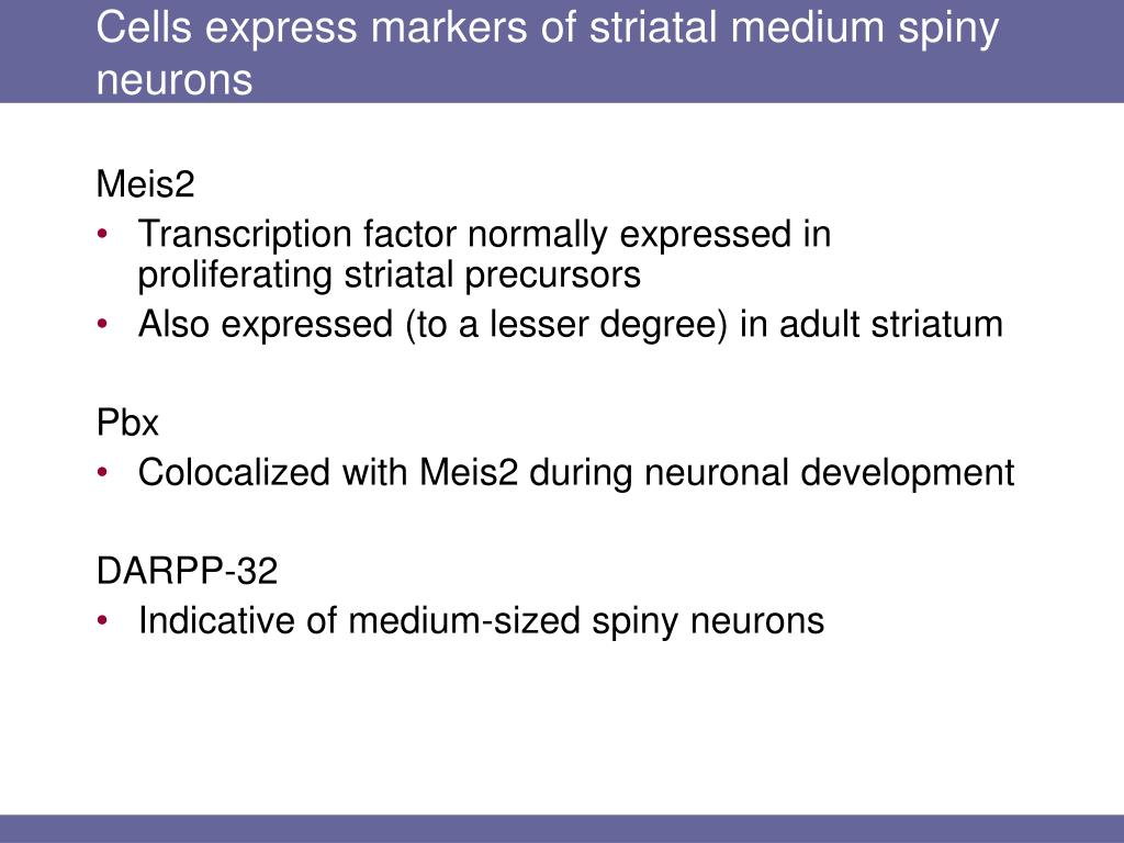 Cells express markers of striatal medium spiny neurons