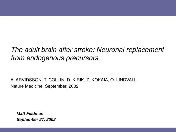 The adult brain after stroke neuronal replacement from endogenous precursors