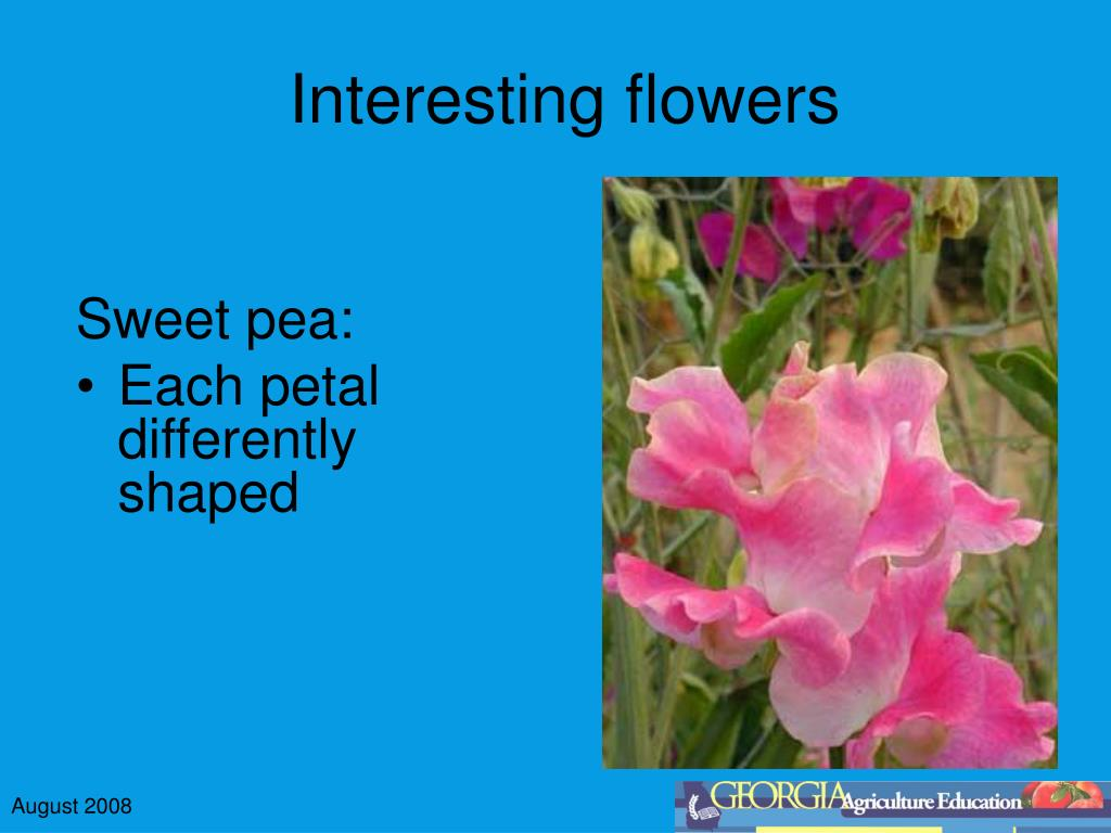 Interesting flowers