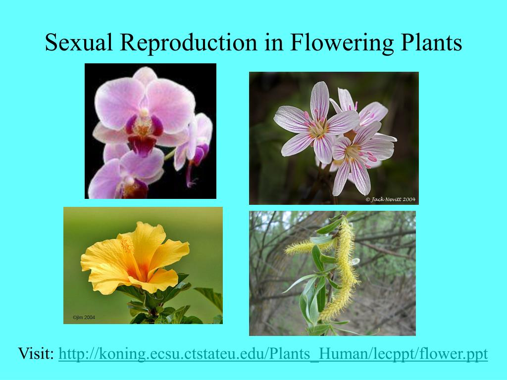 sexual reproduction in flowering plants l.