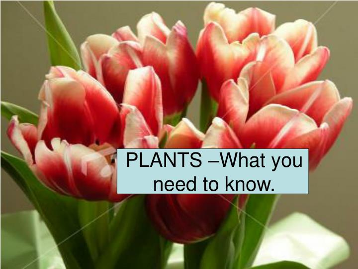PLANTS –What you need to know.