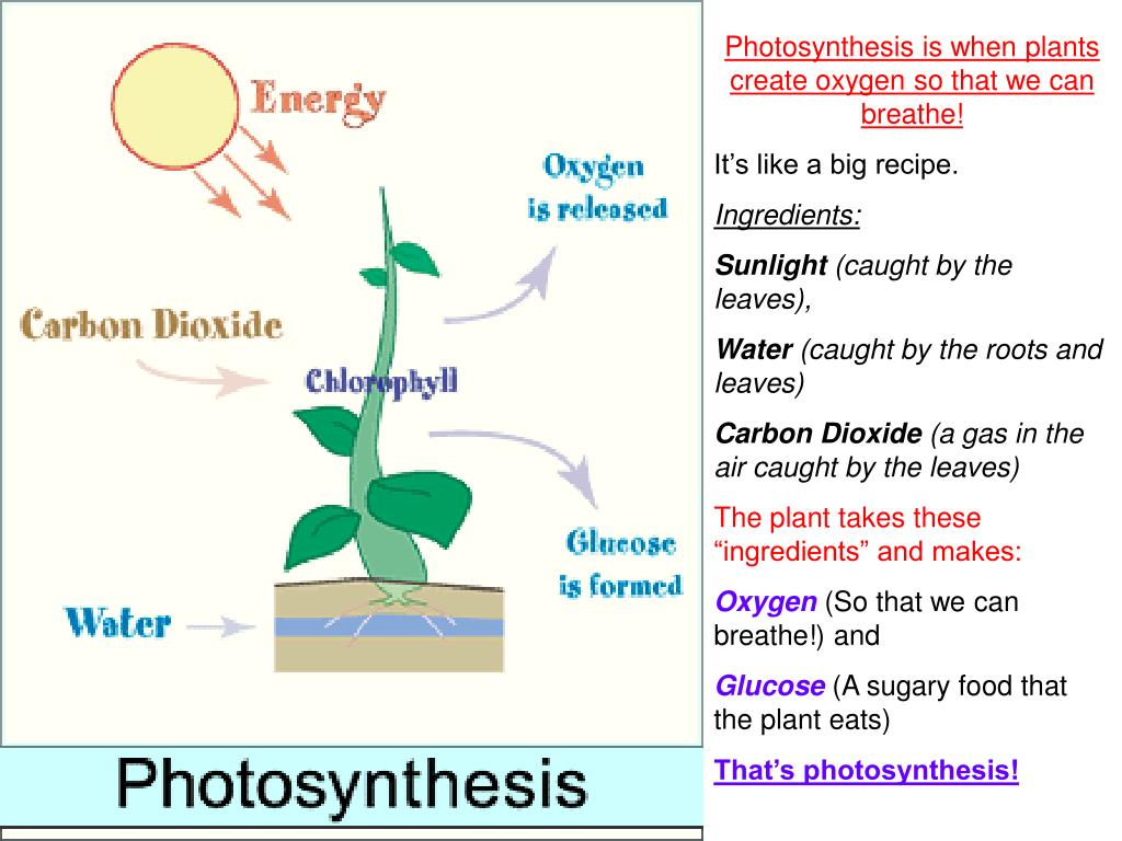 Photosynthesis is when plants create oxygen so that we can breathe!