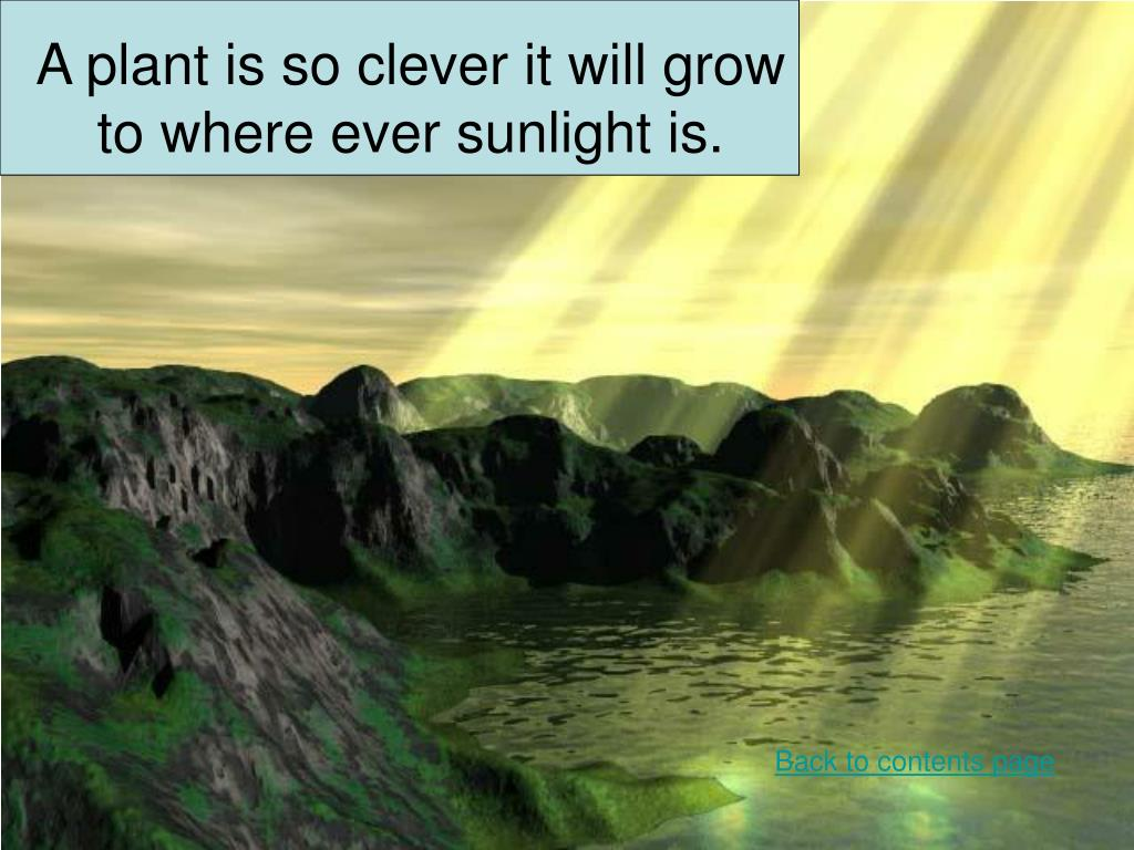 A plant is so clever it will grow to where ever sunlight is.