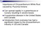 importance of chrysanthemum white rust caused by puccinia horiana