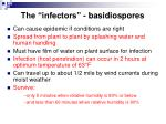 the infectors basidiospores