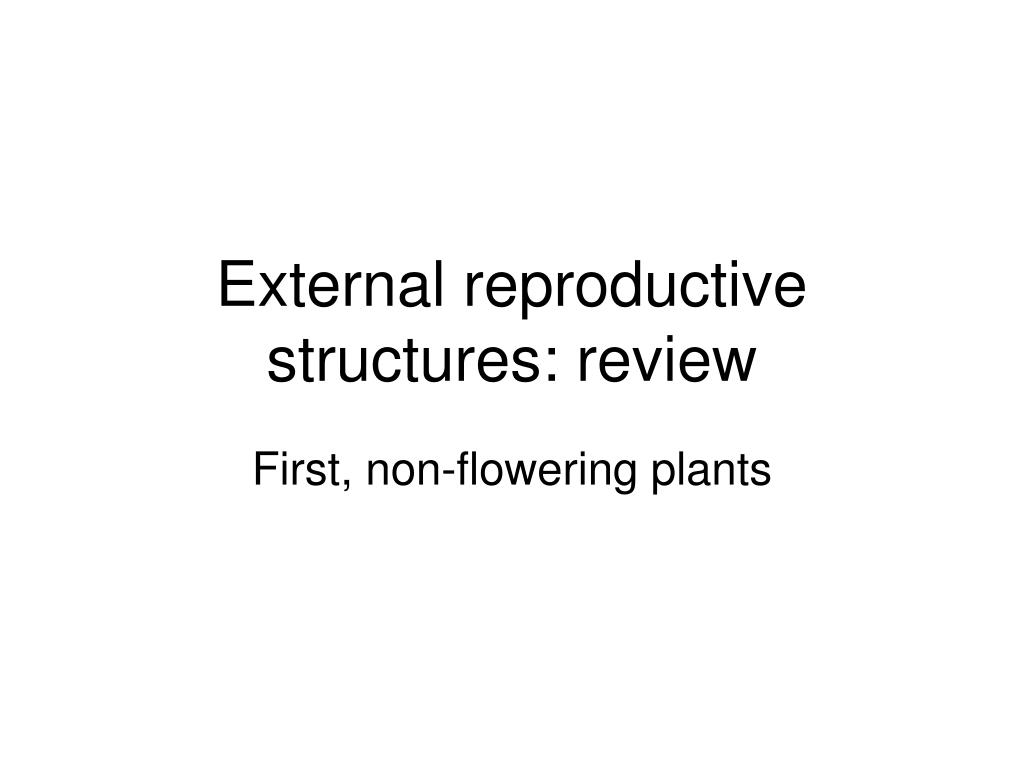 external reproductive structures review l.