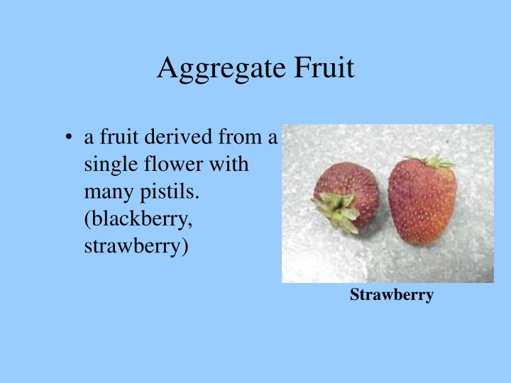 Aggregate Fruit