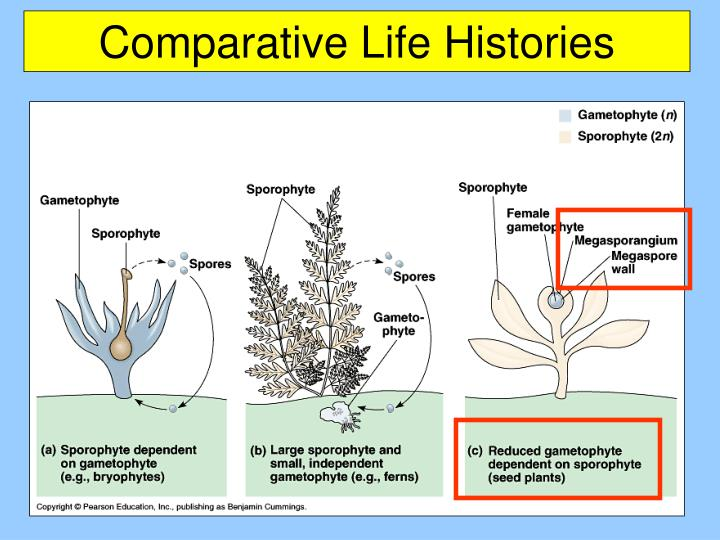 Comparative Life Histories