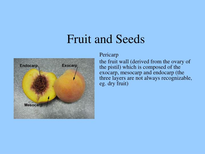 Fruit and Seeds