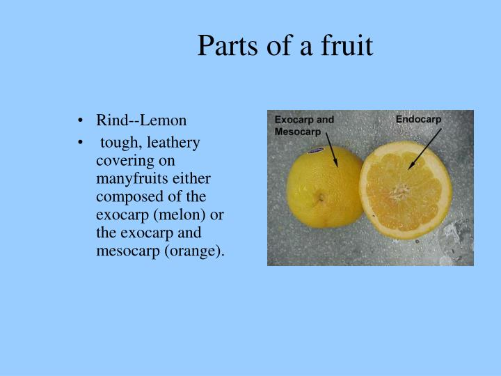 Parts of a fruit