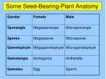 some seed bearing plant anatomy