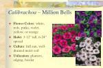 calibrachoa million bells