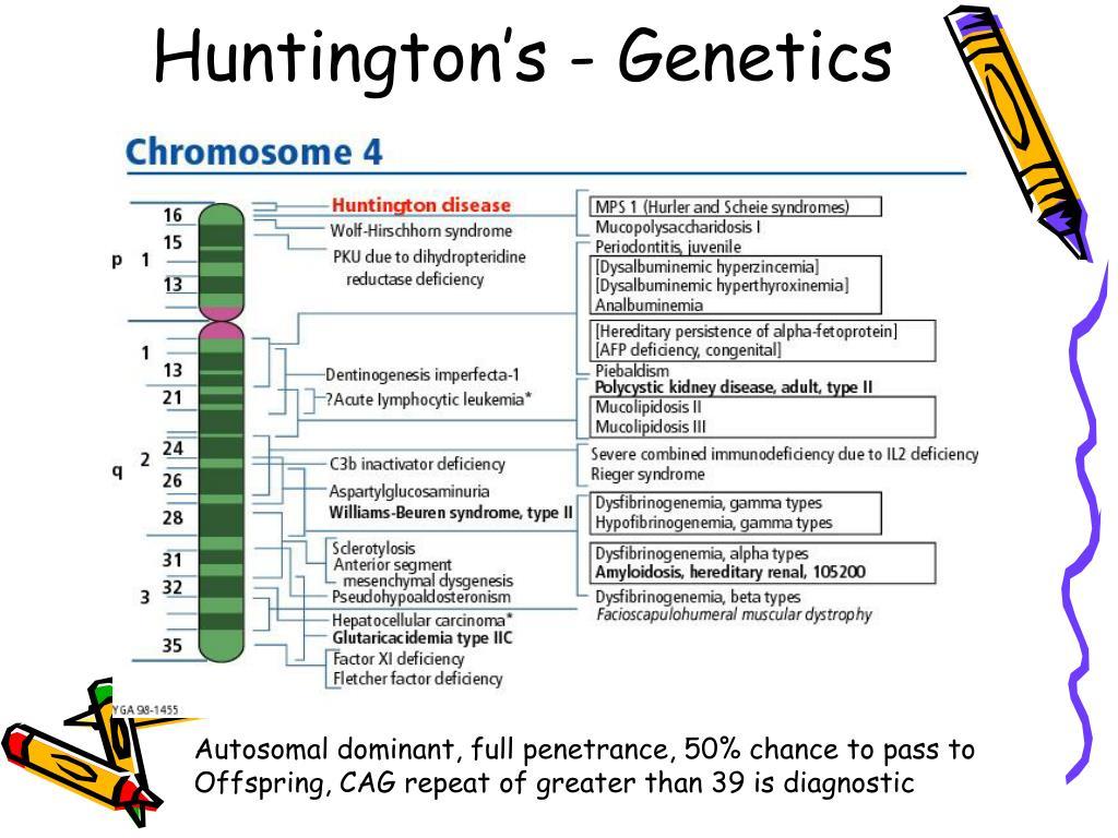Huntington's - Genetics