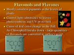 flavonols and flavones
