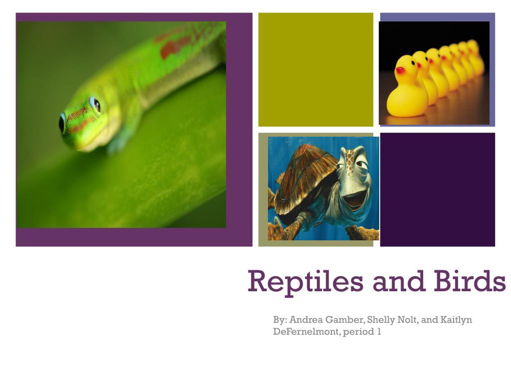 reptiles and birds l.