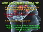 what can happen to the brain