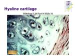 hyaline cartilage29