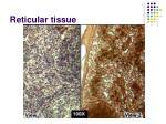 reticular tissue13