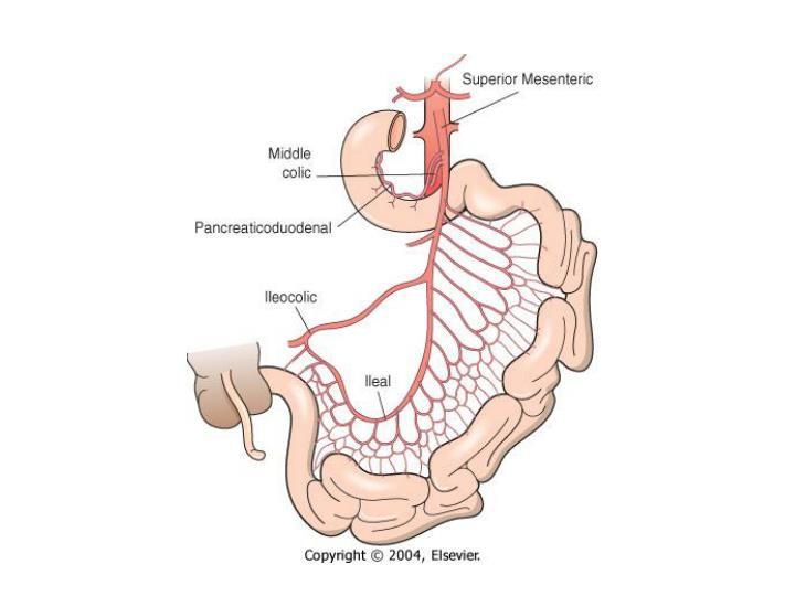 Basic science small bowel
