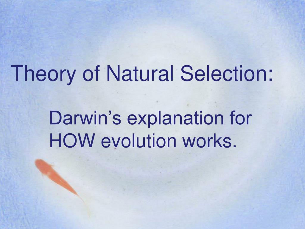 theory of natural selection l.
