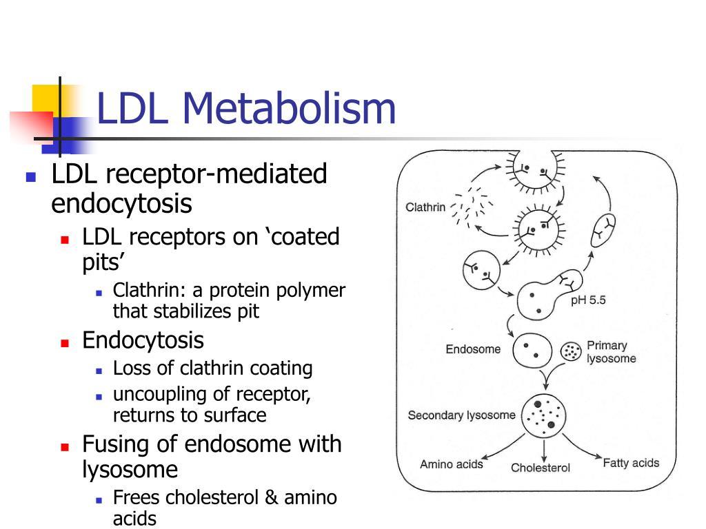 LDL Metabolism