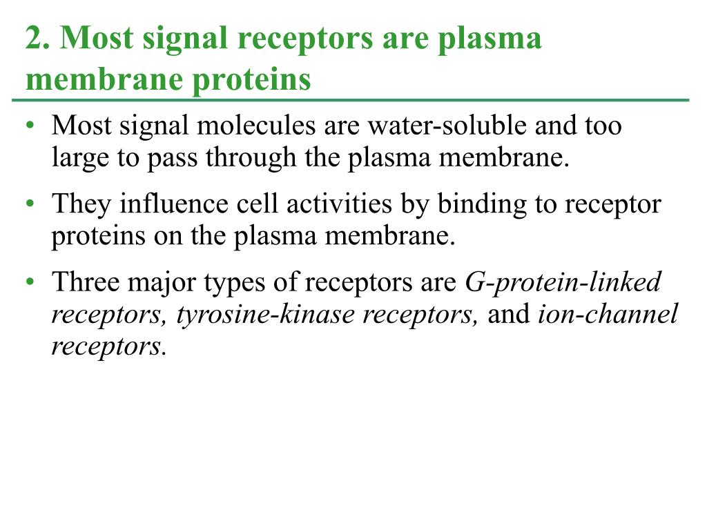 Most signal molecules are water-soluble and too large to pass through the plasma membrane.