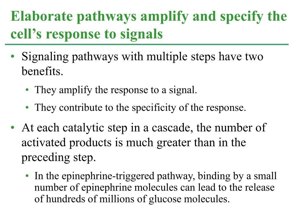 Signaling pathways with multiple steps have two benefits.
