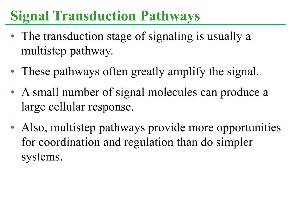 The transduction stage of signaling is usually a multistep pathway.