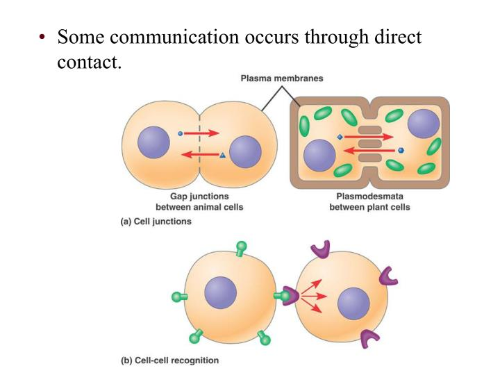 Some communication occurs through direct contact.