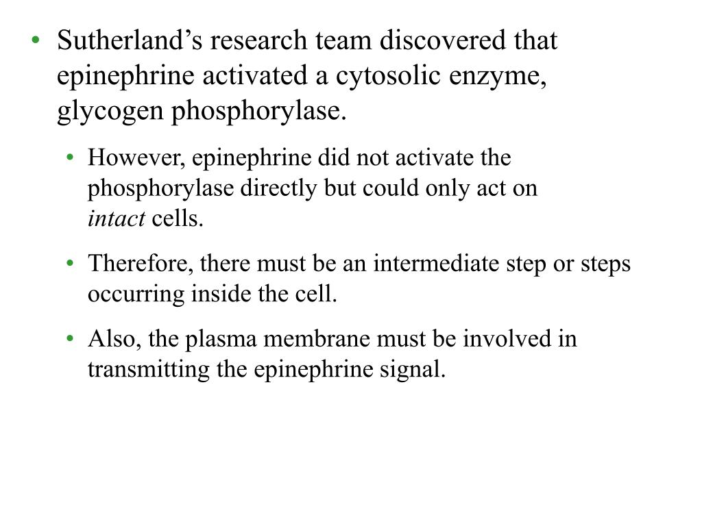 Sutherland's research team discovered that epinephrine activated a cytosolic enzyme, glycogen phosphorylase.