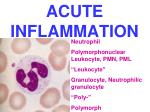 acute inflammation7