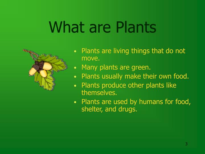 What are plants