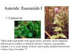 asterids euasterids i