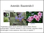 asterids euasterids i4