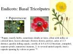 eudicots basal tricolpates1