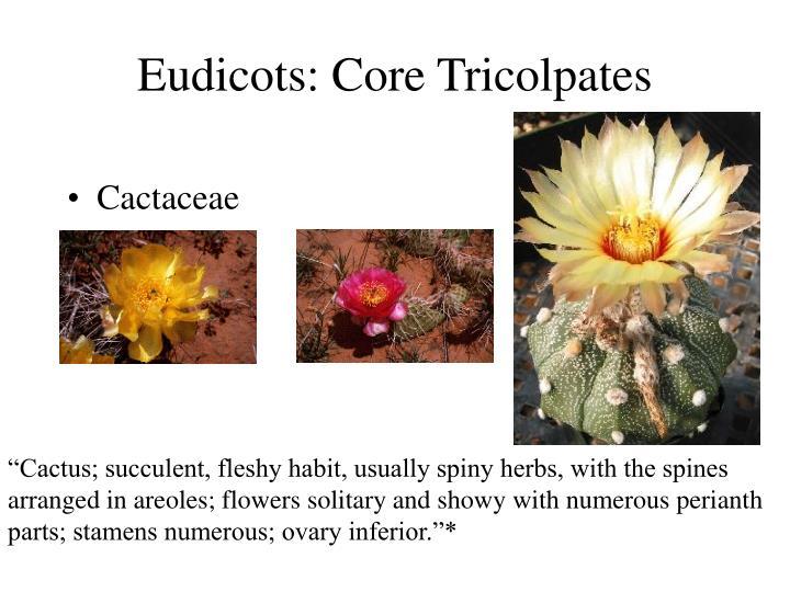 Eudicots: Core Tricolpates