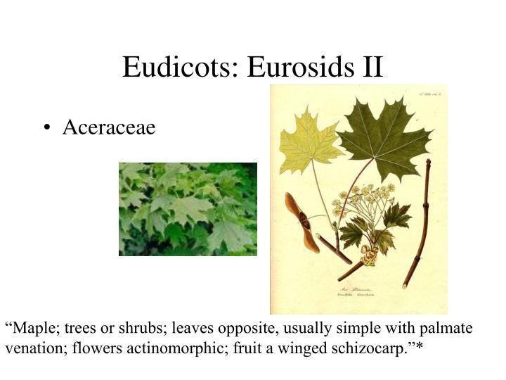 Eudicots: Eurosids II
