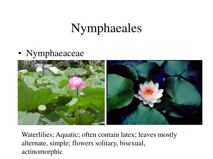Nymphaeales