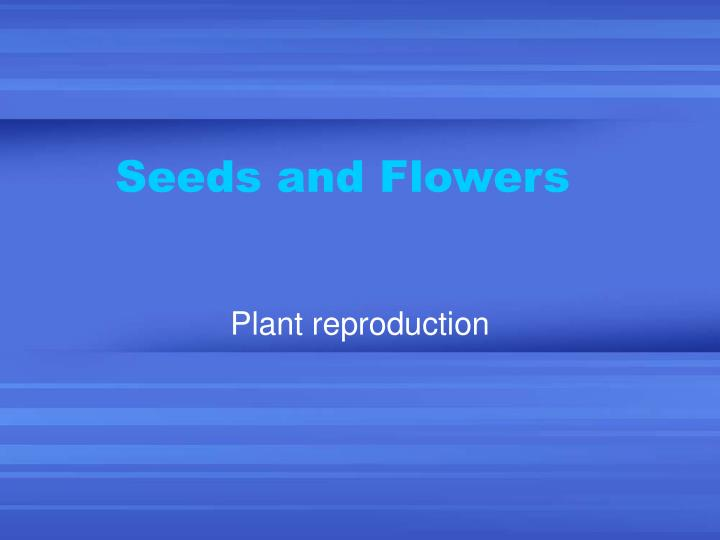 seeds and flowers n.