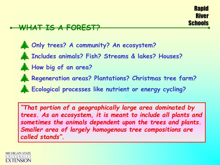 what is a forest n.