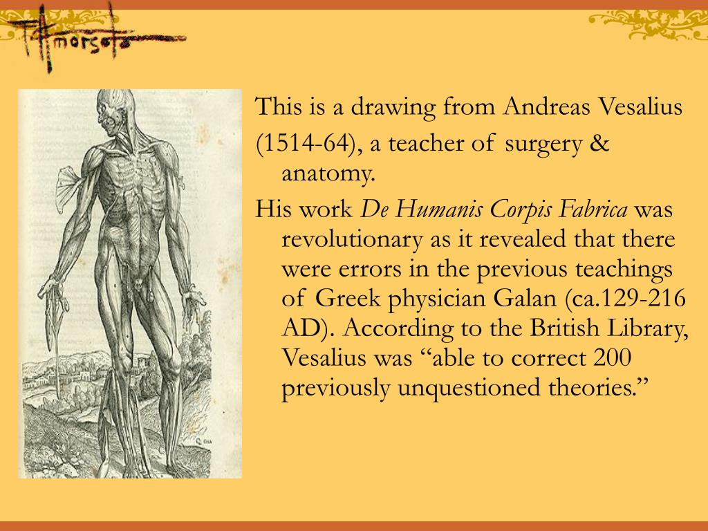 This is a drawing from Andreas Vesalius
