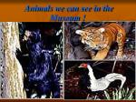 animals we can see in the museum