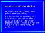 heterofermentative metabolism