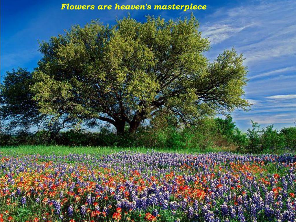 Flowers are heaven's masterpiece