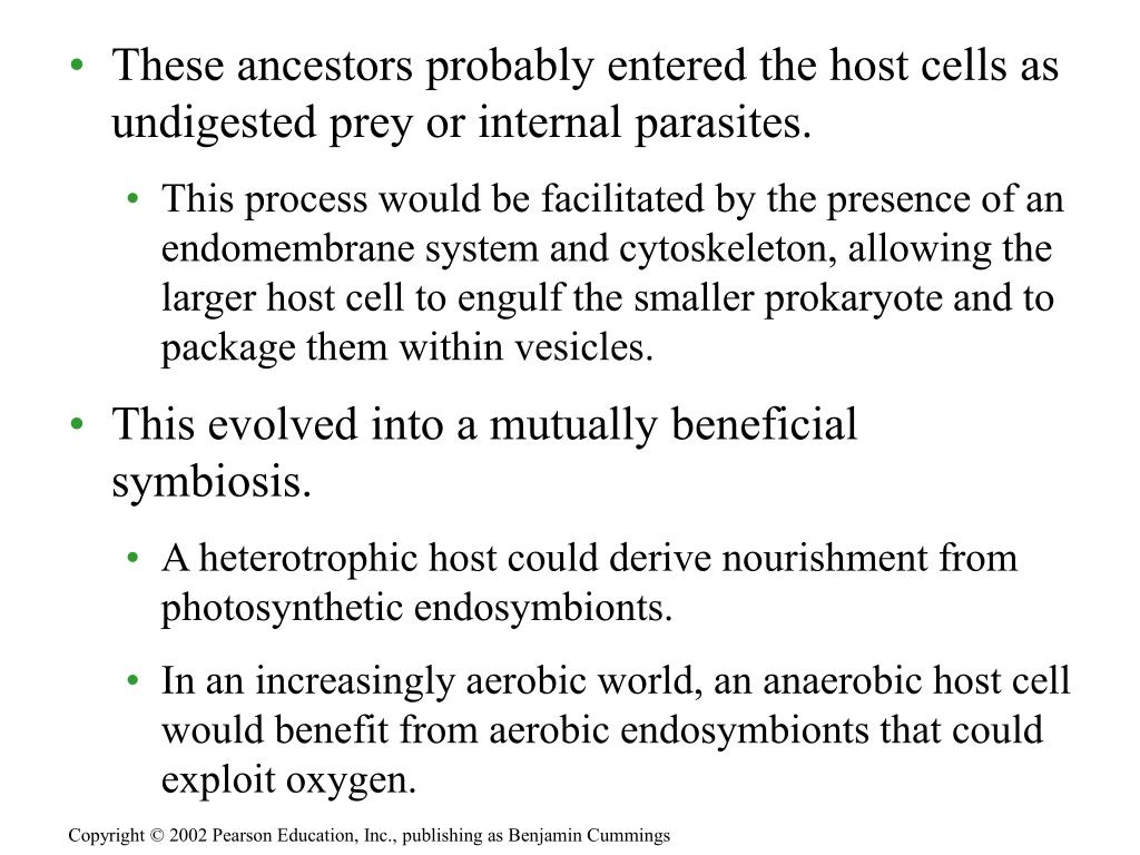 These ancestors probably entered the host cells as undigested prey or internal parasites.
