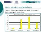 colon microbiota activate pahs