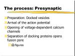 the process presynaptic