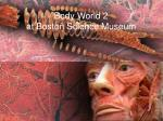 body world 2 at boston science museum