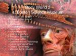 body world 2 at boston science museum1