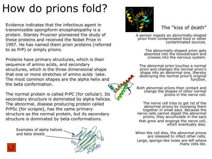 How do prions fold